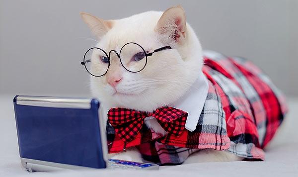 Kot oglądający prezentację